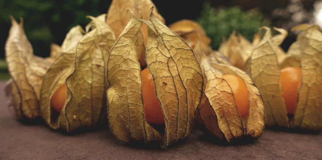 owoce physalis