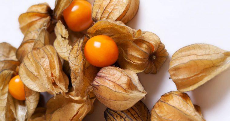 owoce physalis w łupinach