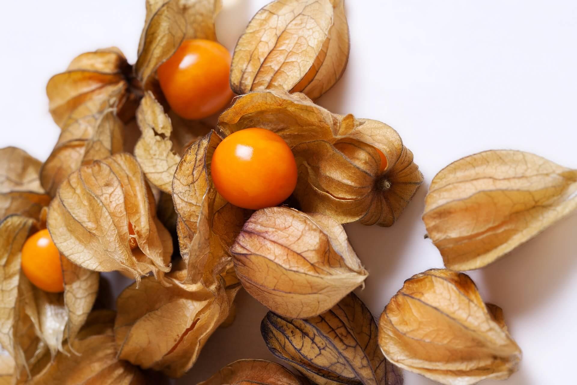 Owoc physalis – co to jest miechunka peruwiańska i jak ją jeść ?