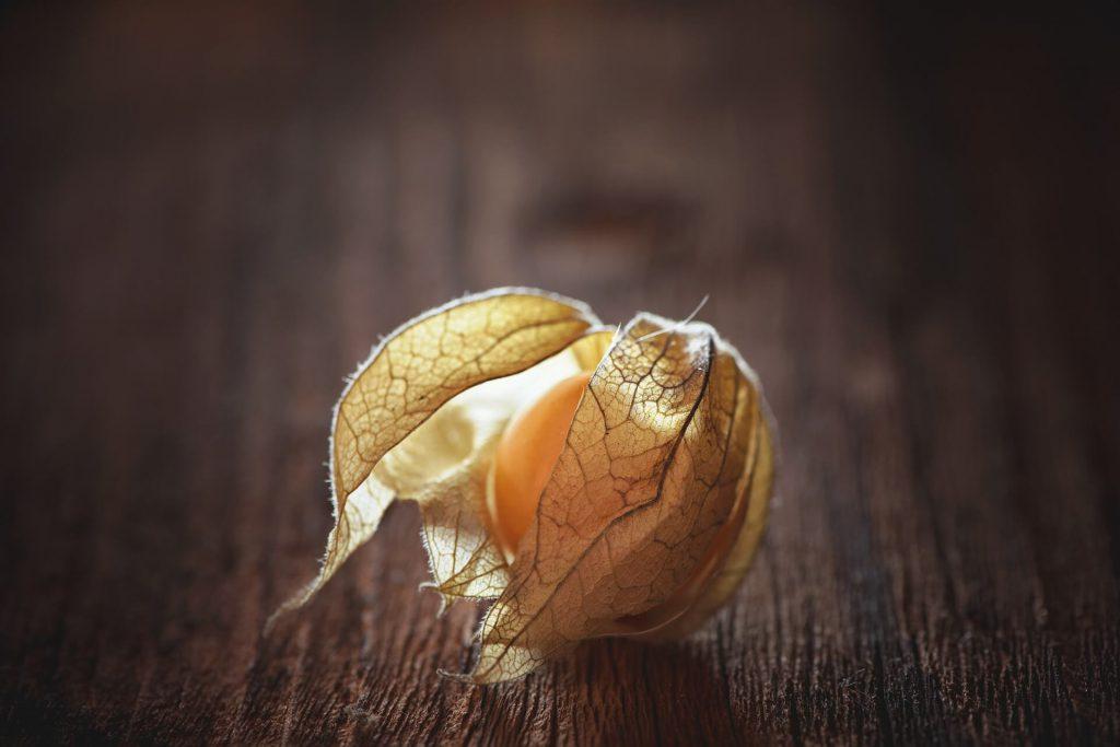 physalis owoc