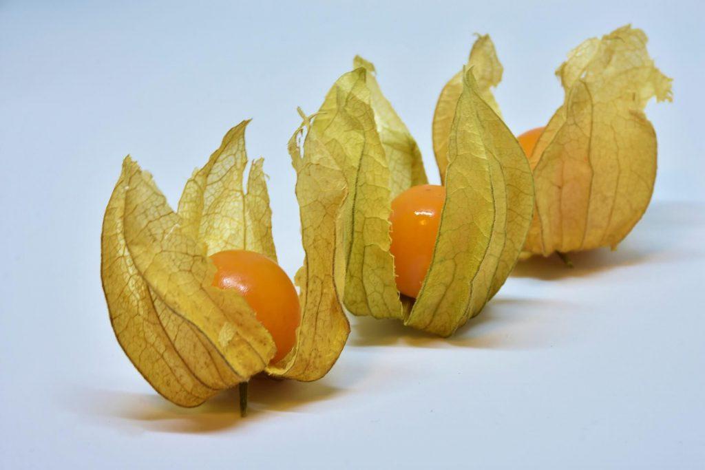 physalis owoce