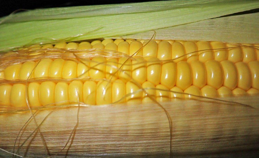jak gotować kukurydzę