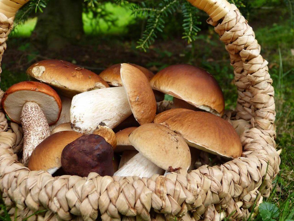 jak zrobić grzyby marynowane w occie
