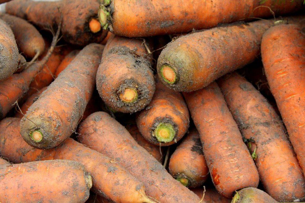 jak przechować marchew na zimę