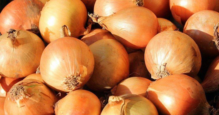 jak przechowywać cebulę